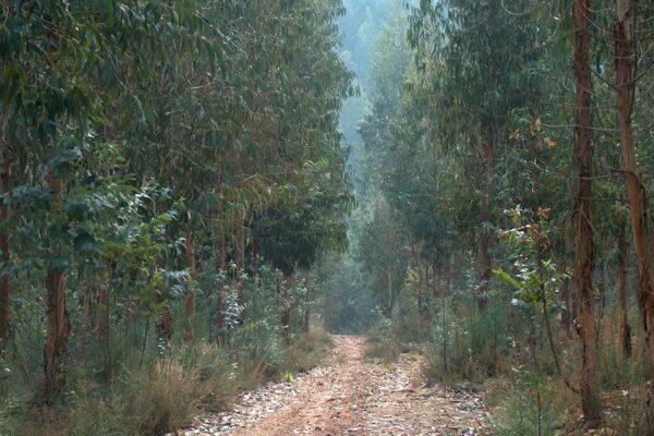 Um retrato da floresta portuguesa